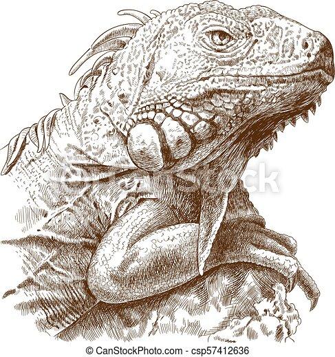 tête, gravure, illustration, iguane - csp57412636