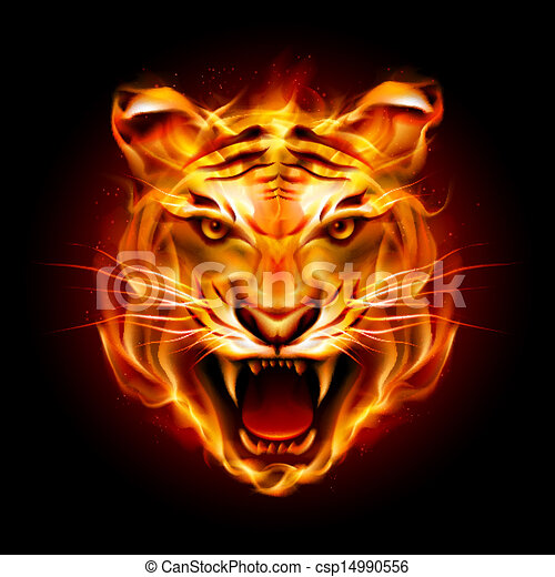 tête tigre, flamme - csp14990556