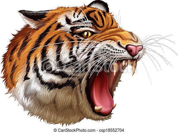 T te tigre rugir t te illustration tigre fond blanc - Image tete de tigre ...