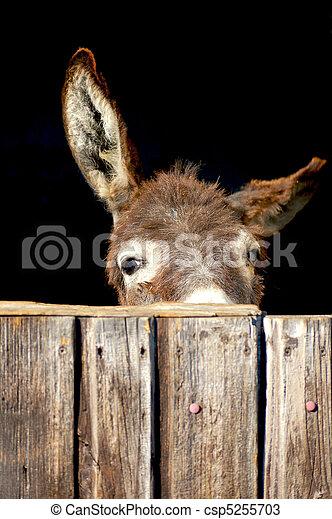 tímido, burro - csp5255703