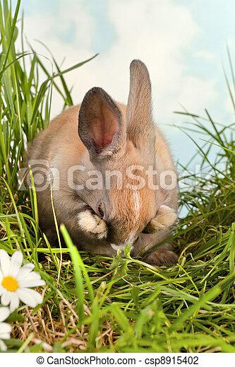 Conejo tímido - csp8915402