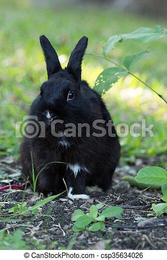 Conejo negro tímido con semillas - csp35634026