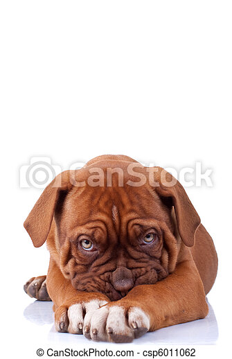 Perro tímido - csp6011062