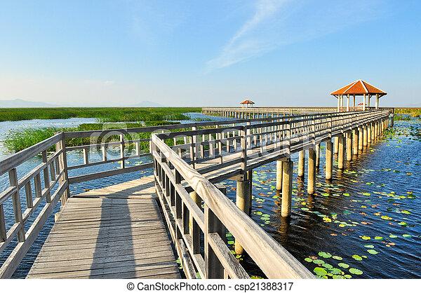 tó, sétány, liget, bridzs, nemzeti - csp21388317