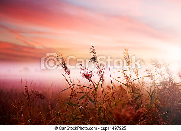 tôt, brumeux, brume, paysage., matin - csp11497925