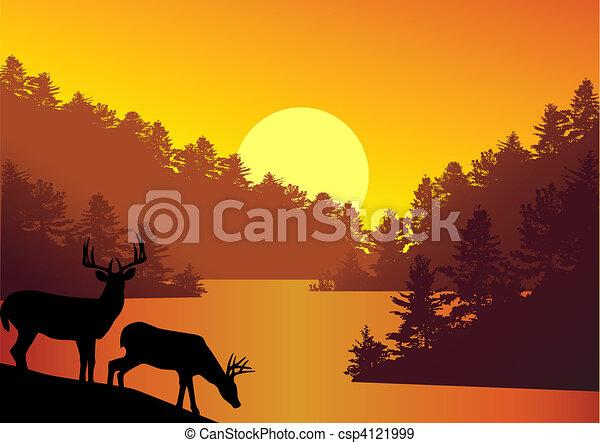 tło, natura - csp4121999