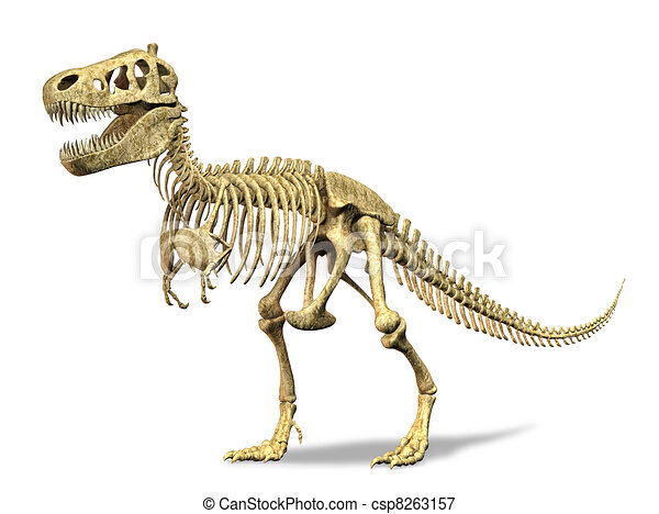 T-Rex skeleton. on white background. Clipping path included. - csp8263157