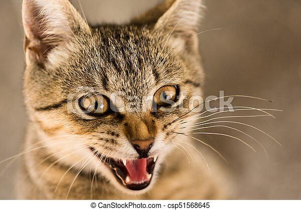 tabby cat animal portrait - csp51568645