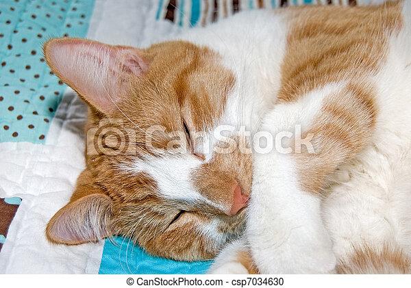 tabby cat napping - csp7034630