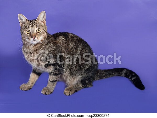 Tabby cat sitting on lilac - csp23300274