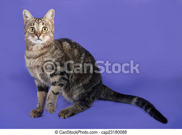 Tabby cat sitting on lilac - csp23180088