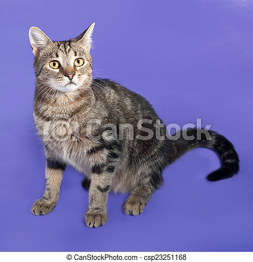 Tabby cat sitting on lilac - csp23251168