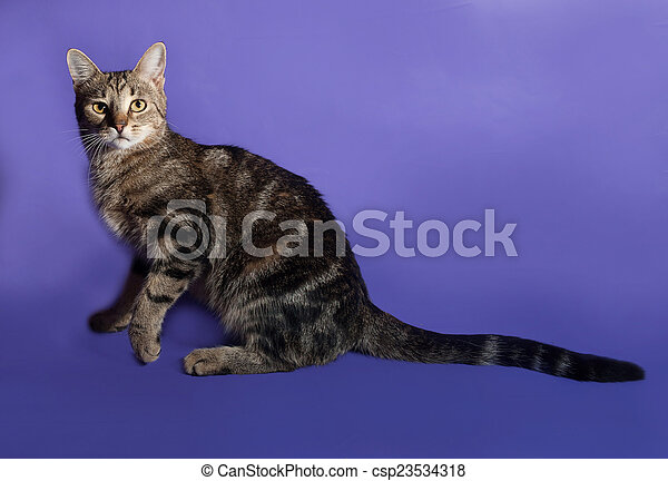 Tabby cat standing on lilac - csp23534318