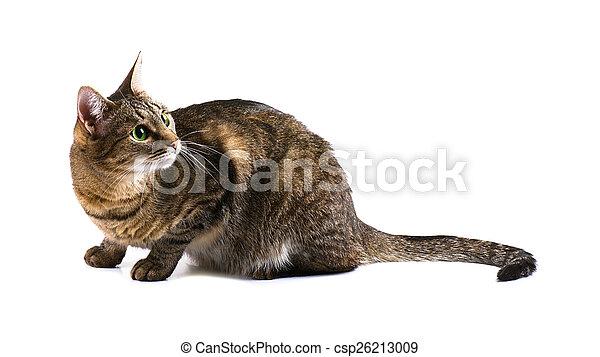 Tabby surprised cat - csp26213009
