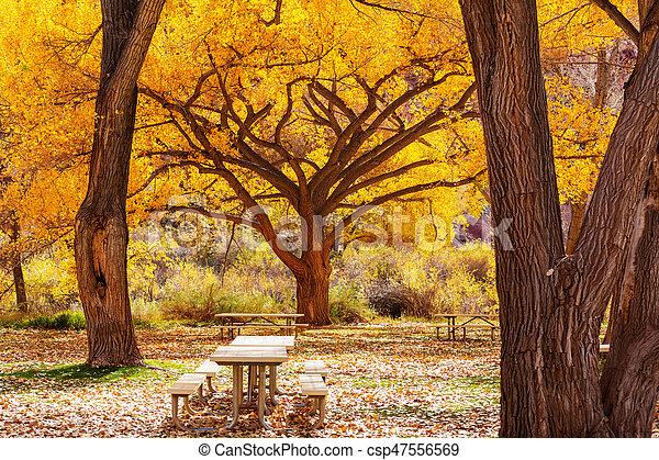 Mesa de picnic - csp47556569