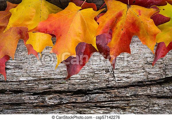 table bois, feuilles, érable, automne - csp57142276
