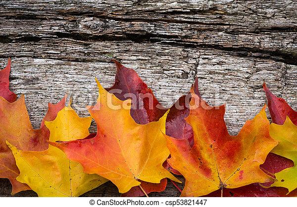 table bois, feuilles, érable, automne - csp53821447