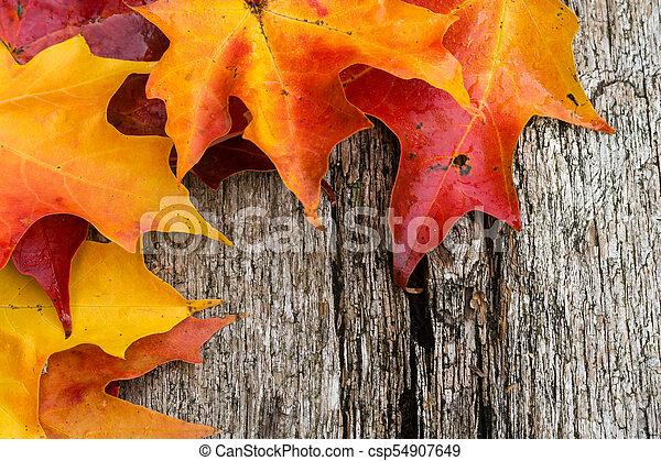table bois, feuilles, érable, automne - csp54907649