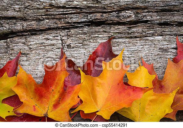 table bois, feuilles, érable, automne - csp55414291