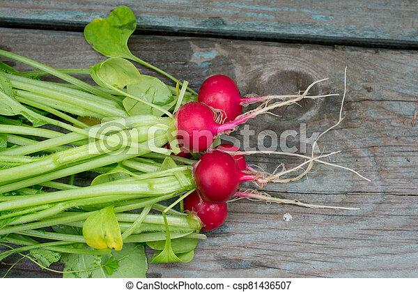 table, radis, bois - csp81436507