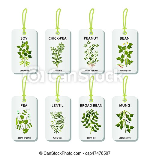 Tags with legumes plants with leaves, pods and flowers - csp47478507