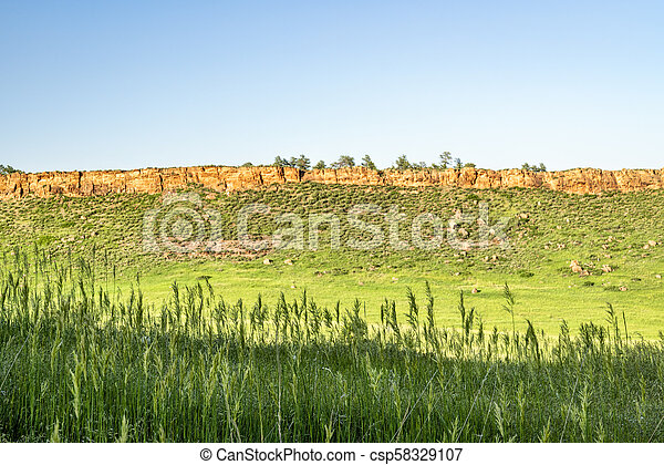 Tall grass in Colorado foothills - csp58329107