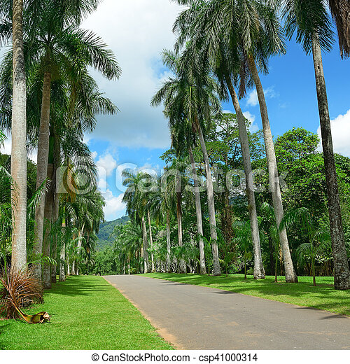 Tall palm trees in the park - csp41000314