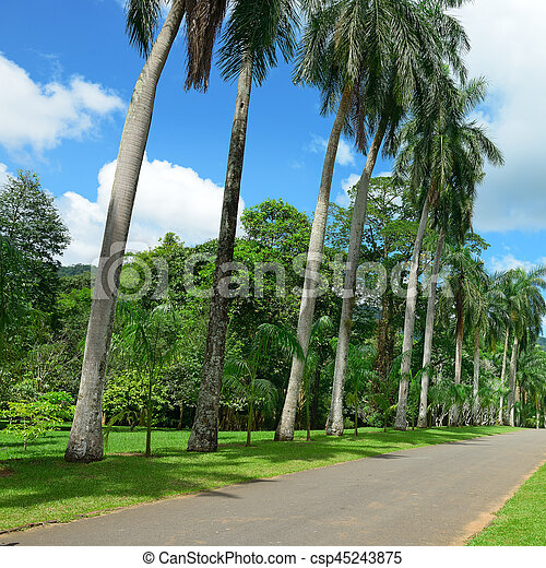 Tall palm trees in the park - csp45243875