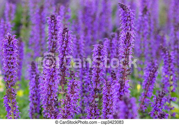 Tall purple flowers many tall purple flowers in the garden tall purple flowers csp3423083 mightylinksfo