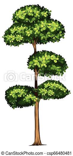 Tall tree white background - csp66480481