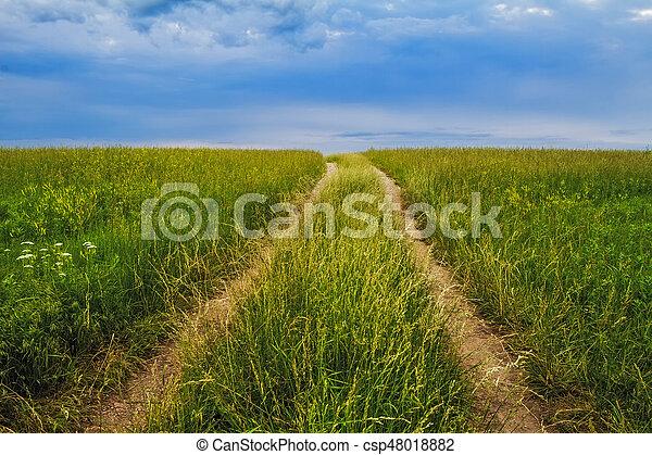 tallgrass, prairie, chemin - csp48018882