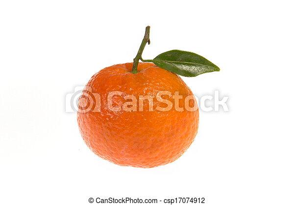 Tangerine  - csp17074912