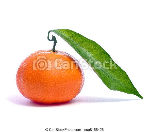 tangerine - csp8166426