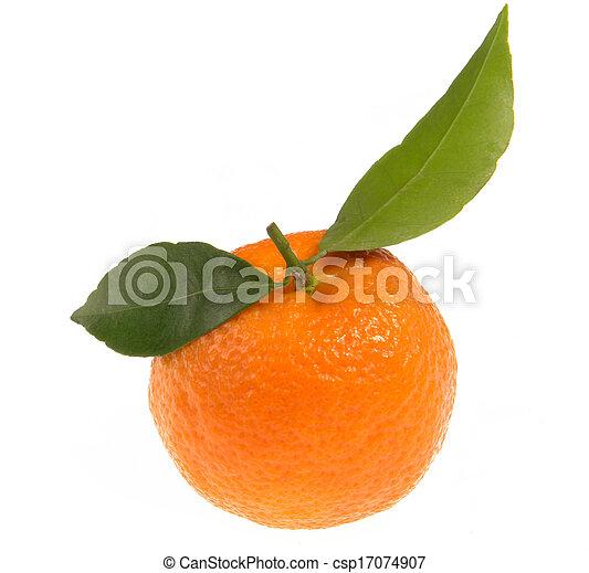 Tangerine  - csp17074907