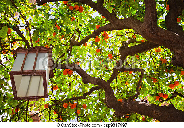 Tangerine tree - csp9817997
