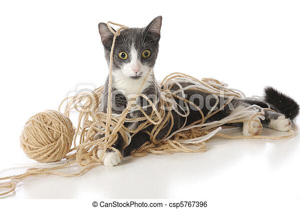 Save The Cat Deutsch