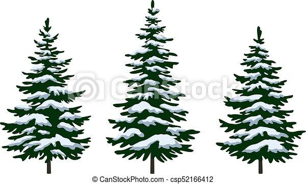 Tanne, weihnachtsbäume. Tanne, blaues, satz, winter ...