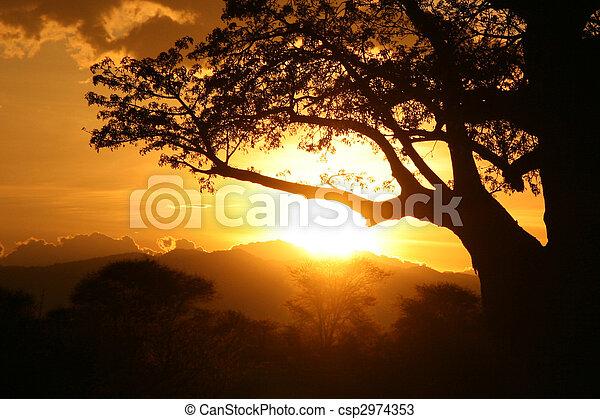tansania, afrikas, afrikanisch, sunset. - csp2974353