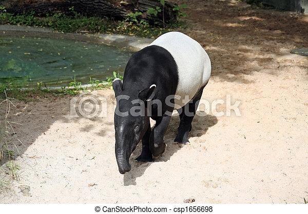 tapir - csp1656698