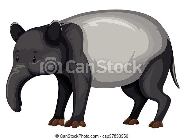 Tapir on white background - csp37833350