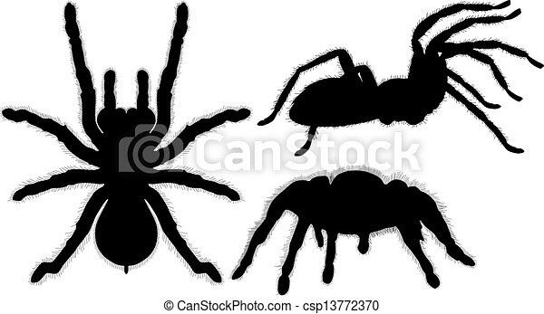 tarantula vectors illustration search clipart drawings and eps rh canstockphoto com red knee tarantula clipart tarantula spider clipart