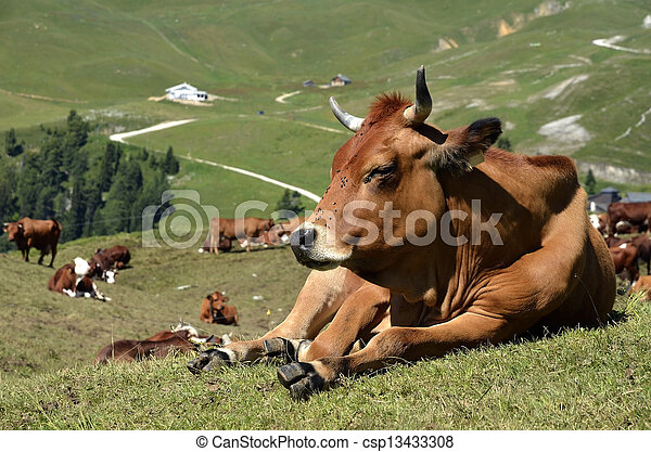 Tarine cow in the French Alps - csp13433308