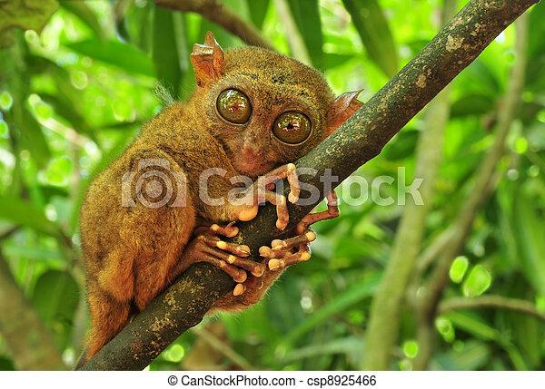 tarsier - csp8925466
