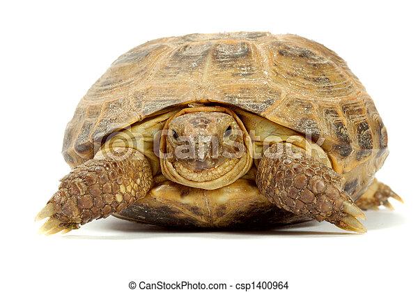 tartaruga - csp1400964
