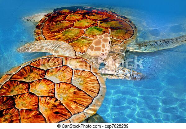 tartaruga, verde, mar - csp7028289