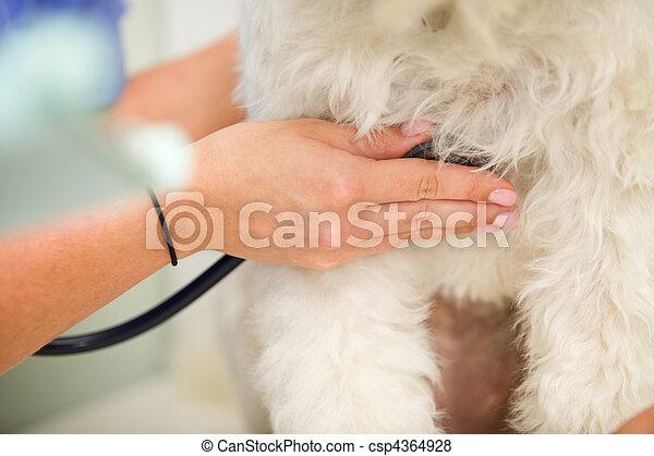 Ritmo cardíaco de perro - csp4364928