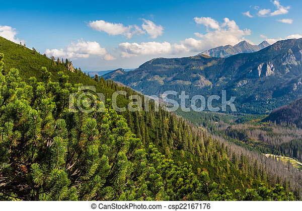 Tatras Mountains covered by green pine forests, Poland. - csp22167176