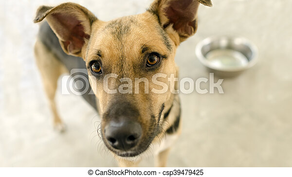 Tazón de perro - csp39479425