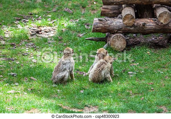 tbilisi, groep, aapjes, dierentuin - csp48300923