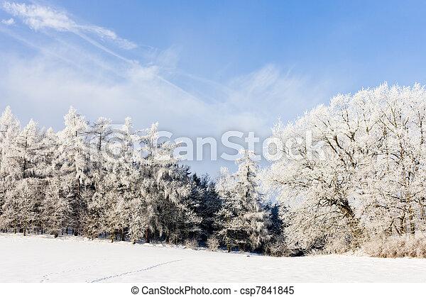 tcheco, paisagem, república, inverno - csp7841845
